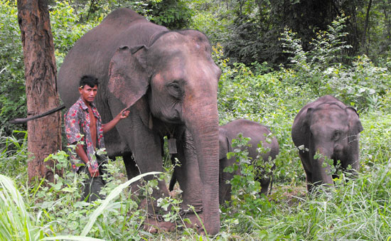 Elephant Back Riding and teak wood plantation at Green Hill Valley Camp